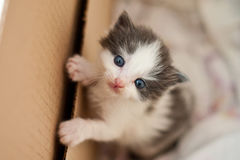 Bello ritratto di un gatto adulto e di un gattino che sembrano int profondo immagini stock