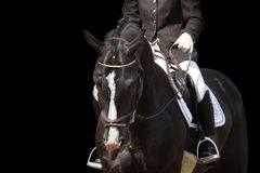 Bello ritratto marrone del cavallo di sport isolato sul nero Immagini Stock