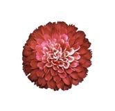 Bello sapone rosso che scolpisce fiore su bianco Fotografia Stock Libera da Diritti