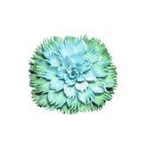Bello sapone verde che scolpisce fiore su bianco Fotografia Stock Libera da Diritti