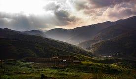 Bello scenico del terrazzo del ricer in sapa Vietnam e nella luce del sole Immagini Stock