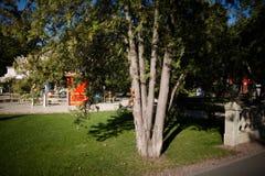 Bello scoiattolo in un parco nella distanza fotografie stock