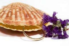 Bello Seashell isolato su priorità bassa bianca Fotografia Stock