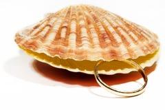 Bello Seashell isolato su priorità bassa bianca Fotografie Stock