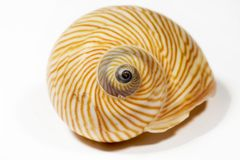Bello Seashell isolato su priorità bassa bianca Immagine Stock