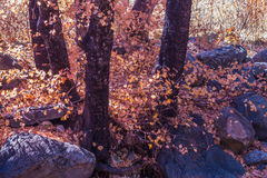 Bello Sedona Arizona su Sunny Autumn Day Fotografie Stock