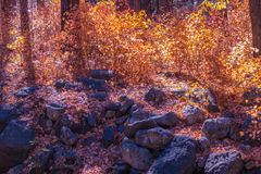 Bello Sedona Arizona su Sunny Autumn Day Immagine Stock