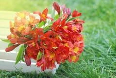 Bello sfondo naturale arancio rosso di Alstromeria Lily Flower Bouquet Green Grass modificato ora legale della molla Immagini Stock