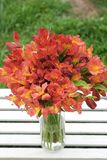 Bello sfondo naturale arancio rosso di Alstromeria Lily Flower Bouquet Green Grass modificato ora legale della molla Fotografie Stock
