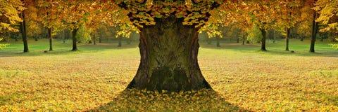Bello, signora dell'autunno di colore Fotografia Stock