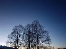 Bello silouette dell'albero alto sul cielo variopinto di tramonto nella regione selvaggia del Circolo polare artico Fotografia Stock