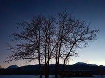 Bello silouette dell'albero alto sul cielo variopinto di tramonto nella regione selvaggia del Circolo polare artico Immagine Stock Libera da Diritti