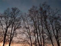 Bello silouette dell'albero alto sul cielo variopinto di tramonto nella regione selvaggia del Circolo polare artico Fotografia Stock Libera da Diritti