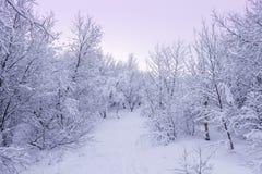 Bello snowsacpe Immagini Stock Libere da Diritti