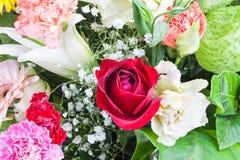 Bello sono aumentato, il garofano lilly e la pianta del cigno. Fotografie Stock Libere da Diritti