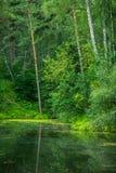 Bello stagno con chiara acqua Fotografie Stock Libere da Diritti