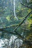Bello stagno con chiara acqua Fotografia Stock
