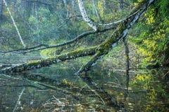 Bello stagno con chiara acqua Fotografie Stock