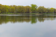 Bello stagno nel parco di estate Fotografia Stock Libera da Diritti