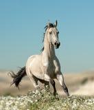 Bello stallone nel giacimento di fiore Immagine Stock