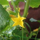 Bello stupore del piccolo fiore giallo Fotografie Stock Libere da Diritti