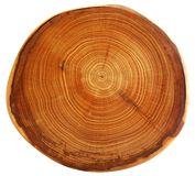 Bello taglio dell'albero Fotografie Stock
