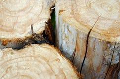 Bello taglio dell'albero Fotografia Stock