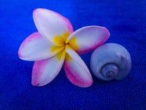 Bello tempo di cena romantico del fiore del frangipane fotografie stock