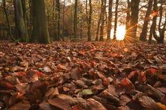 bello terreno boscoso di sera dell'Inghilterra Immagini Stock