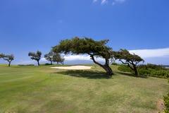 Bello terreno da golf di riva dell'oceano di Maui Fotografie Stock