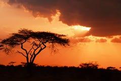 Bello tramonto africano Fotografia Stock