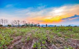 Bello tramonto al paesaggio asciutto del campo di agricoltura Fotografia Stock Libera da Diritti