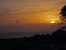 Bello tramonto arancio del mare con il silhuet del seagul e dell'albero immagini stock