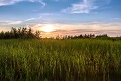 Bello tramonto con la canna su priorità alta Immagini Stock