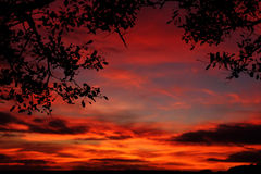 Bello tramonto con le siluette dell'albero Immagini Stock