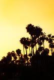 Bello tramonto con le siluette delle palme alla spiaggia Fotografie Stock Libere da Diritti