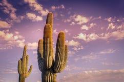 Bello tramonto del deserto dell'Arizona Immagine Stock