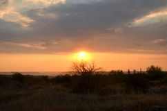 Bello tramonto di estate nei colori rosa sui precedenti delle siluette dell'albero, dei campi e di un cielo blu fotografia stock