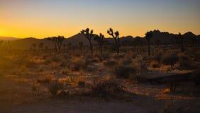 Bello tramonto in Joshua Tree National Park Fotografie Stock