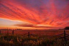 Bello tramonto nella campagna Spaziosità dei campi, fioritura dei fiori, vecchio recinto, nuvole rosse immagini stock