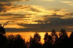 Bello tramonto nella foresta Fotografia Stock Libera da Diritti