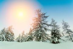 Bello tramonto nelle alpi di Jluia della foresta di inverno in Slovenia Fotografia Stock