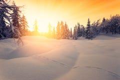 Bello tramonto nelle alpi di Jluia della foresta di inverno in Slovenia Immagini Stock