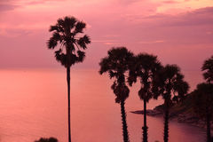 Bello tramonto porpora con la siluetta delle palme Fotografia Stock