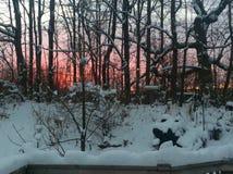 Bello tramonto rosa di inverno Fotografie Stock Libere da Diritti