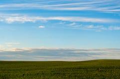 Bello tramonto, sera calda di estate nel campo di grano verde e non maturato immagini stock