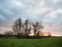 Bello tramonto sopra gli alberi drammatici del cielo del paesaggio vuoto del paese Immagine Stock