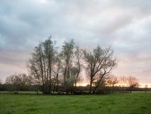 Bello tramonto sopra gli alberi drammatici del cielo del paesaggio vuoto del paese Fotografia Stock