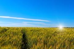 Bello tramonto sopra il giacimento di grano Immagine Stock