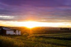 Bello tramonto sopra l'azienda agricola umile durante il raccolto di punta, fine dell'estate Fotografia Stock